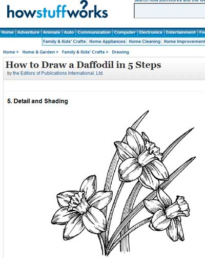 Daffodil drawing for Hand Embroidery Pattern