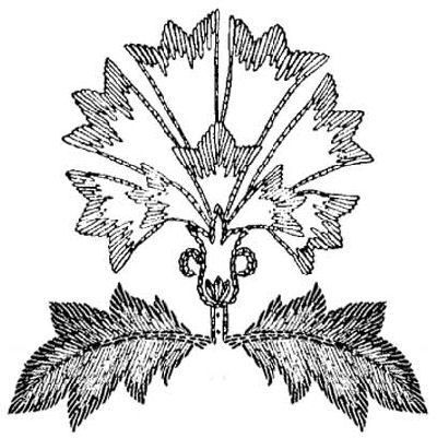 Jacobean motif for hand embroidery