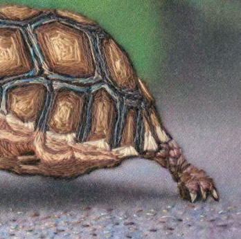 The toes on the tortoise's back leg are perfect turtle toes, too.